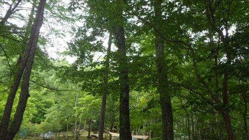 西沢渓谷 笛吹小屋キャンプ場