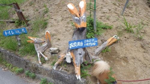 西沢渓谷 笛吹小屋キャンプ場 2日目 きつね