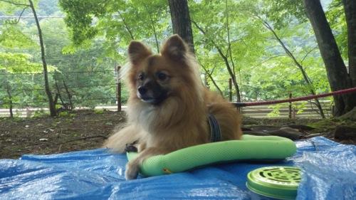 西沢渓谷 笛吹小屋キャンプ場 犬待ち