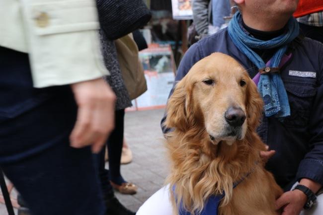 アースデイ東京/Earth Day Tokyo 2014に行ってきました盲導犬